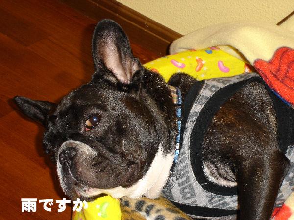 20080107fuku_0011_2