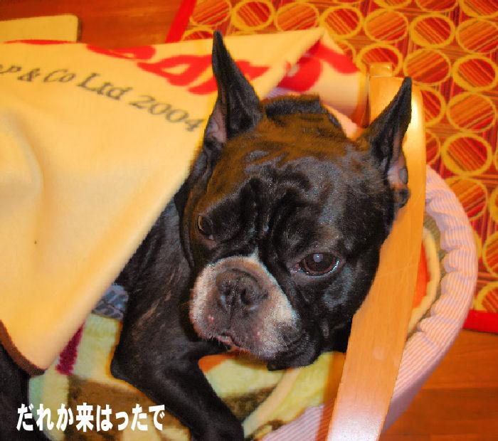 20080111fuku_0081