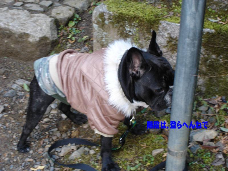 200801117fuku_0011