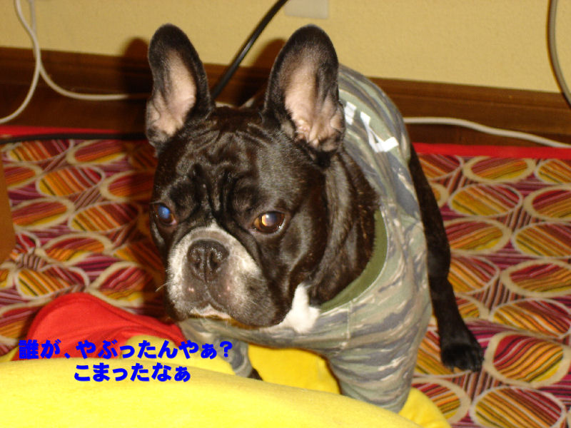 200801119fuku_0041