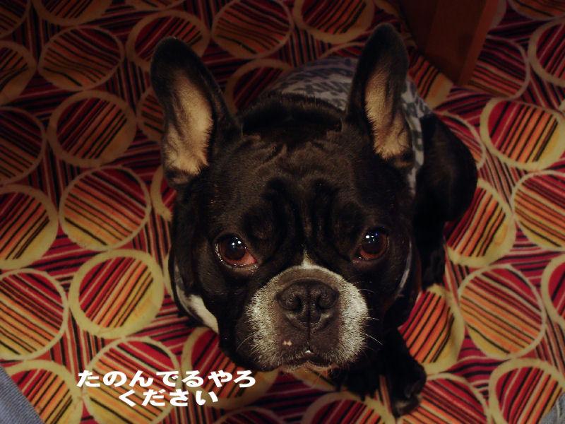 20080124fuku_0101