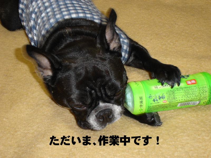 20080122fuku_0041_2