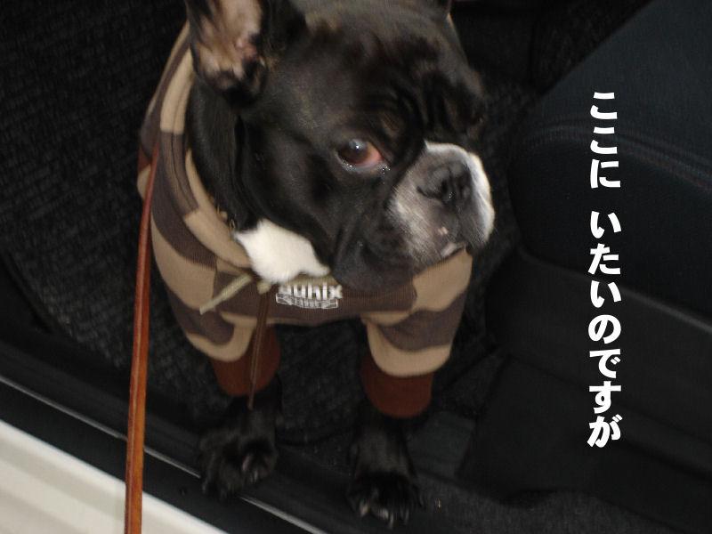 20080229fuku_0061