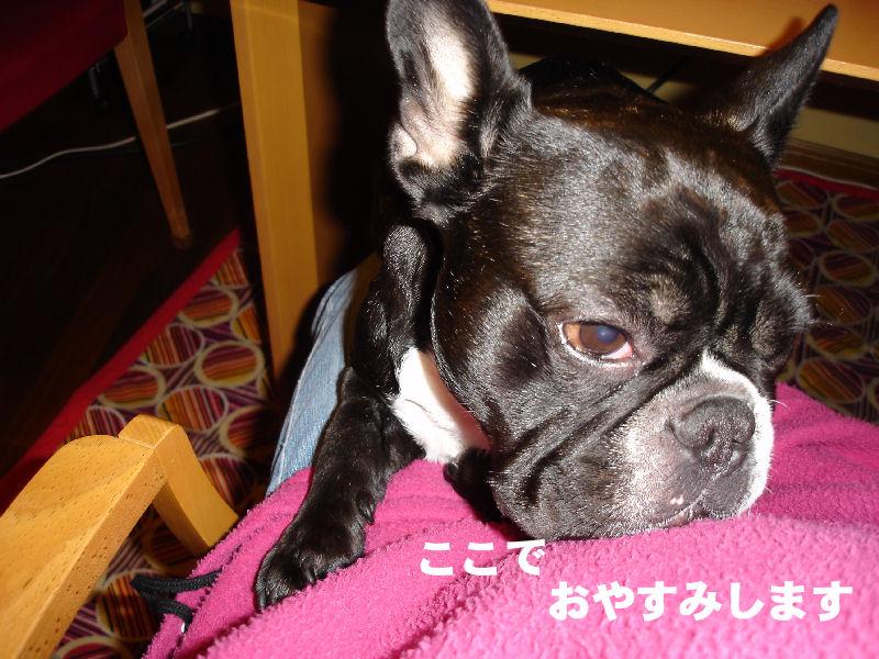 20080305fuku_0241_3
