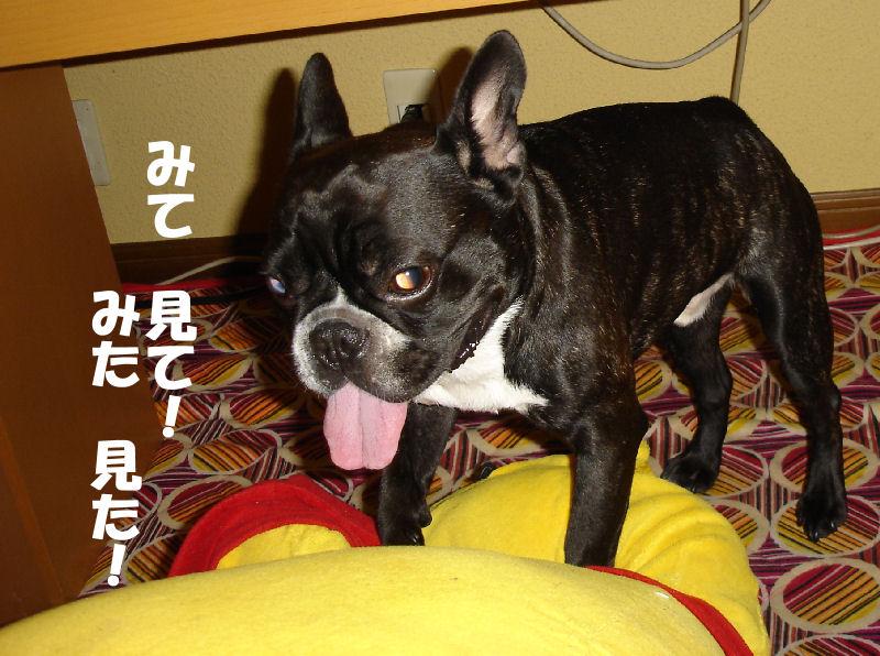 200803012fuku_0151