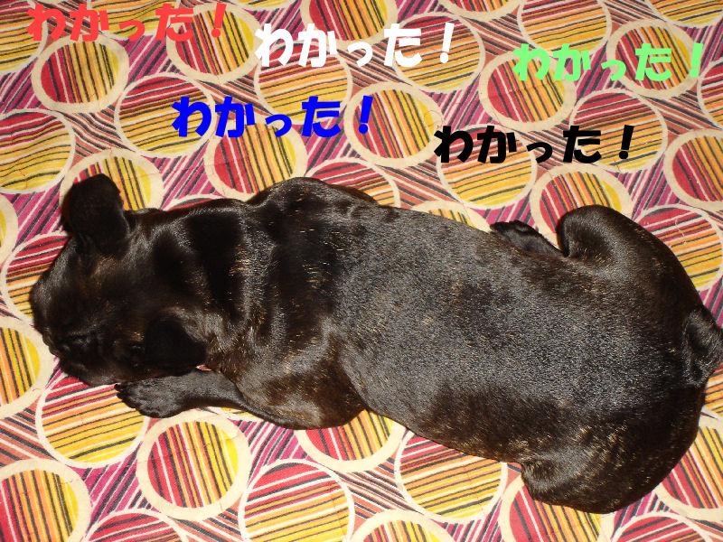 200803015fuku_0161