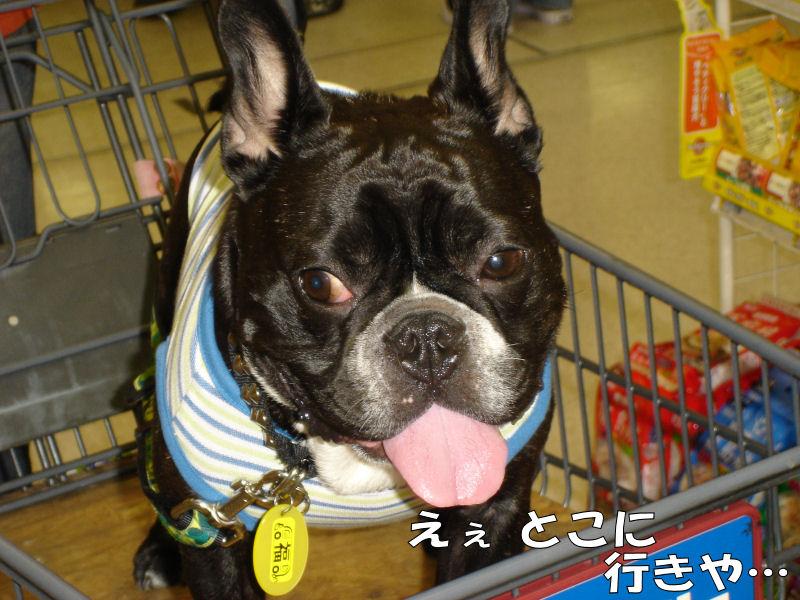 20080413fuku_0841