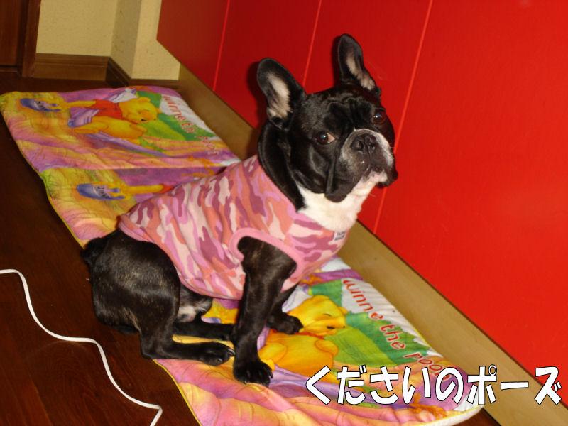 20080416fuku_0101