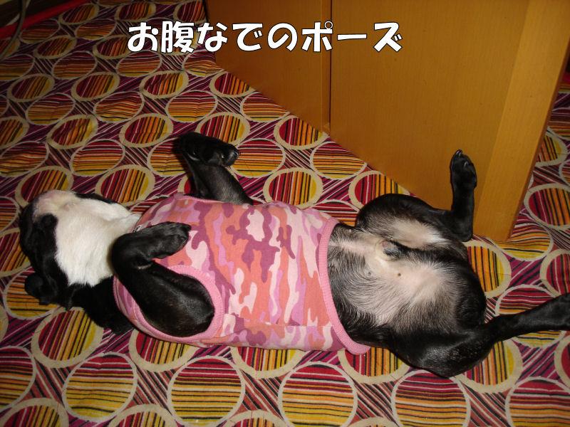 20080416fuku_0131