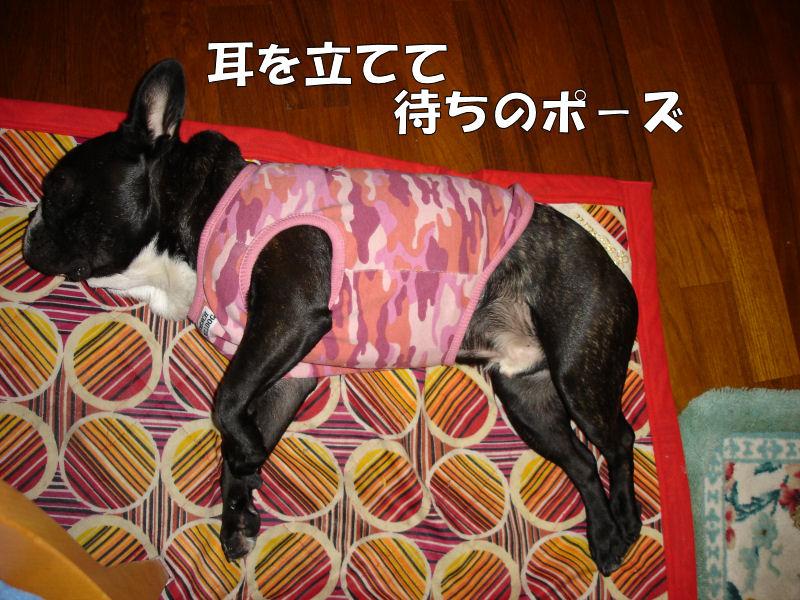 20080416fuku_0141