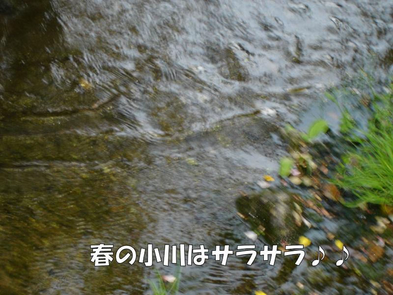 20080423fuku_0231