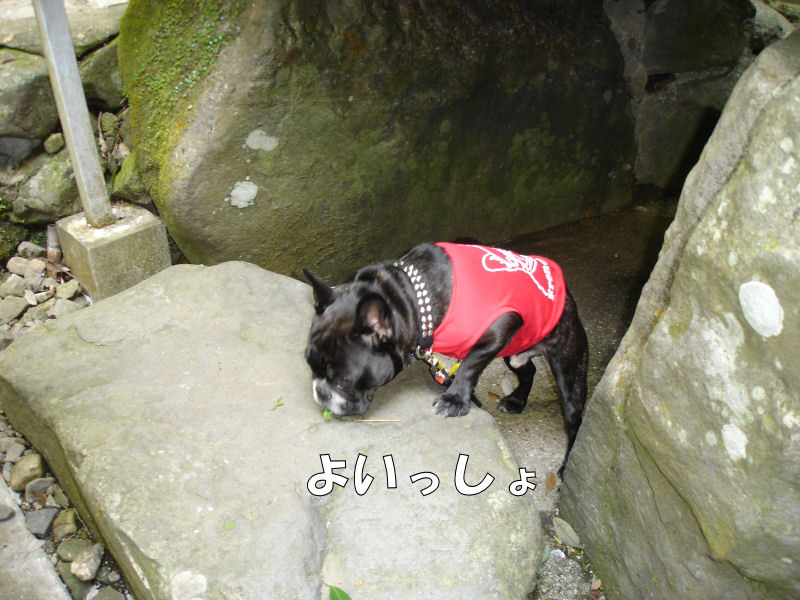 20080427fuku_0171