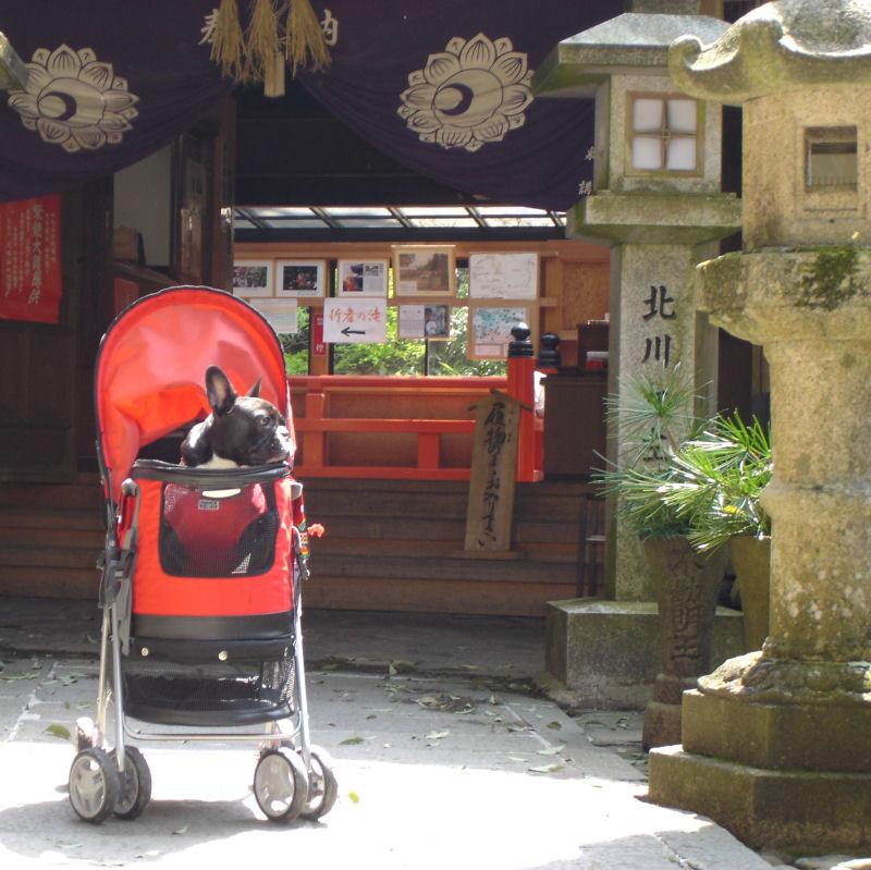 20080427fuku_0251_2