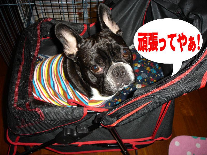 20080511fuku_0151