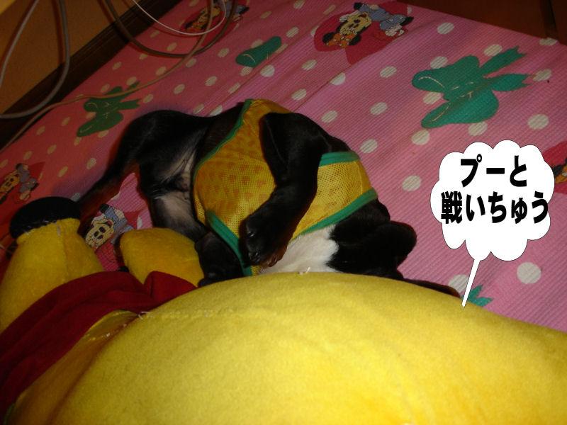 20080511fuku_0041