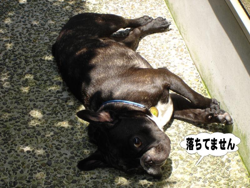 20080526fuku_0011