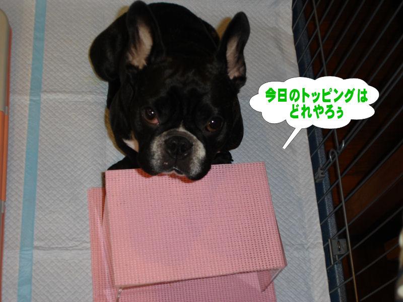 20080531fuku_0011