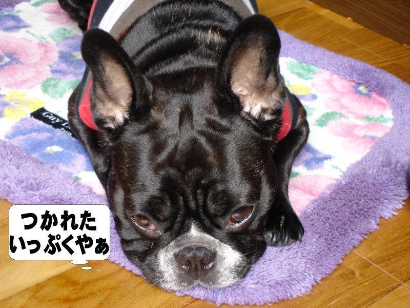 20080611fuku_0241