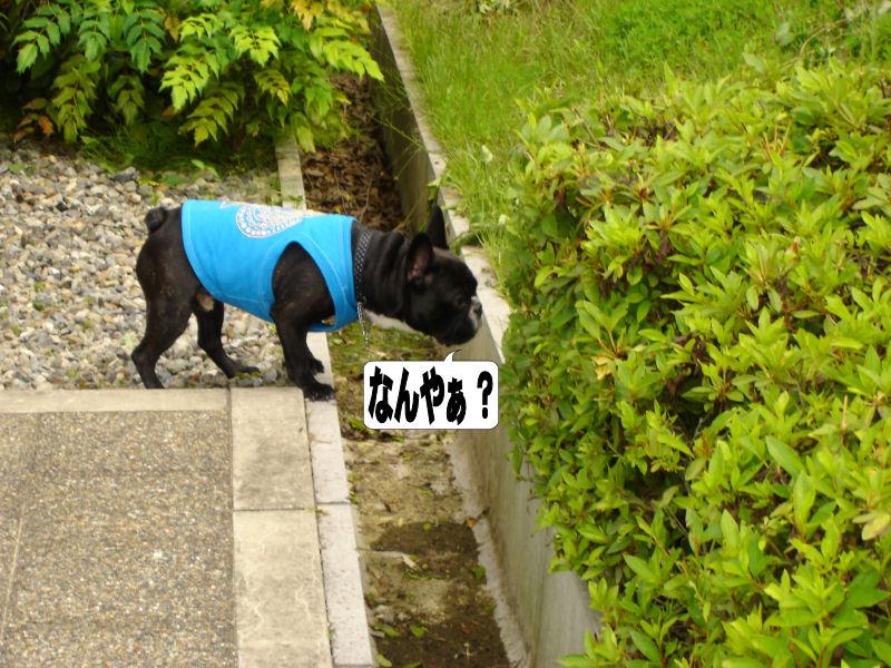 20080614fuku_0871