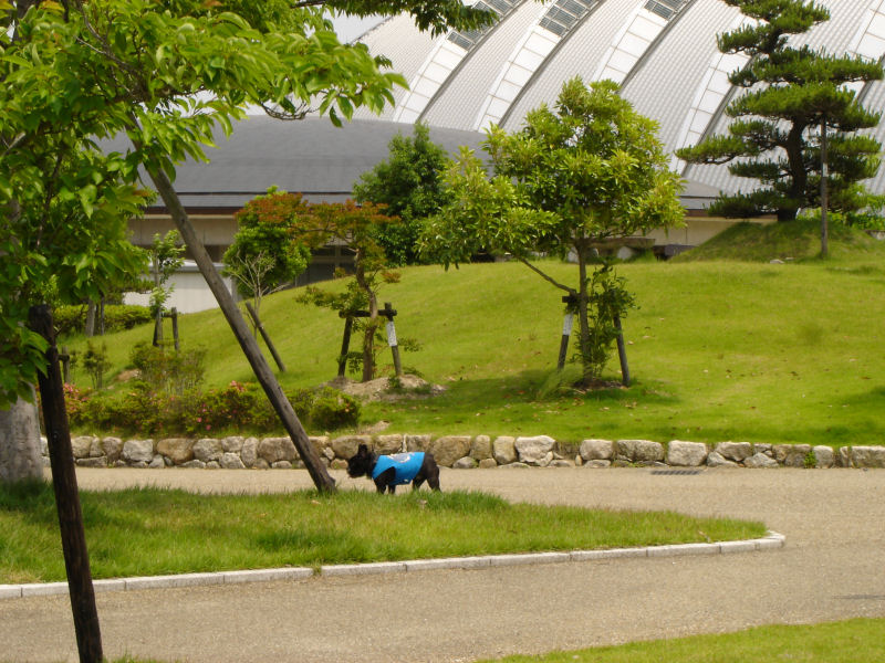 20080614fuku_0201