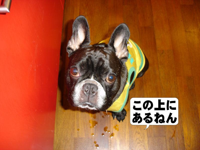 20080619fuku_0041_2