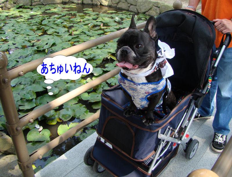 20080713kikouji_010
