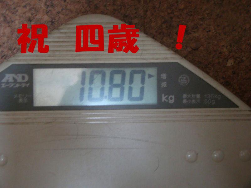 Dsc051231